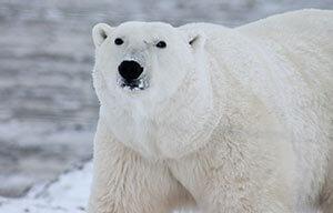 polar-menu