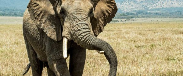 Study Animal Science in Rwanda with Worldwide Navigators