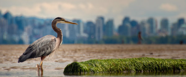 Study Marine Sciences in Vancouver with Worldwide Navigators