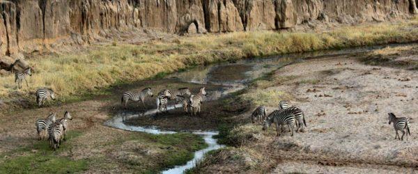 Study Animal Sciences in Tanzania with Worldwide Navigators