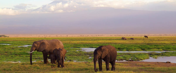 Study Exercise Science in Tanzania with Worldwide Navigators