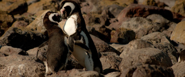 Animal Adventures | Worldwide Navigators
